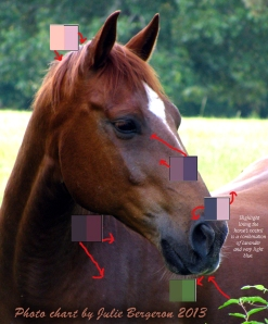 Horse photo with color swatches for learning by Julie Bergeron ©2013