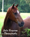 Photo of horse by Julie Bergeron © 2013